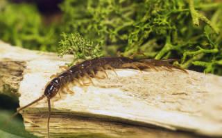 Геофилы в огороде вред или польза