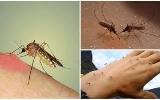 Чем полезны комары в природе и людям